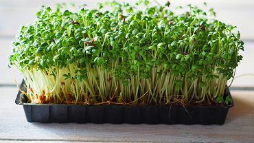 Rzeżucha to roślina z rodziny kapustowatych, a jej fachowa nazwa to pieprzyca siewna