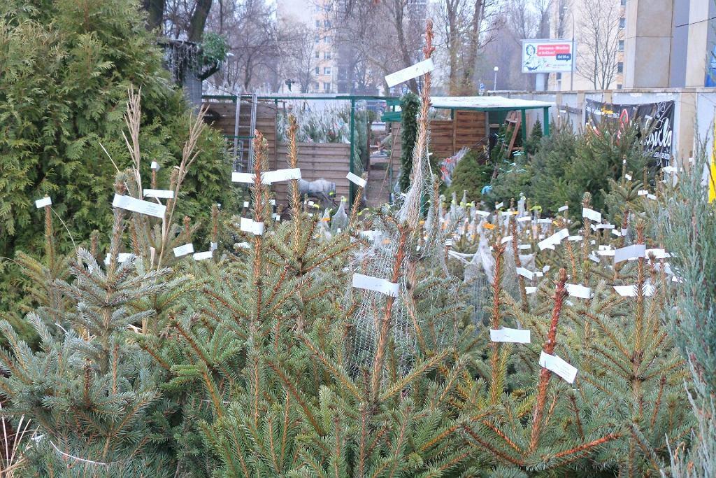 Punkt sprzedaży choinek w Warszawie w poprzednich latach