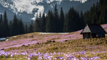 Wiosna budzi się w Tatrach