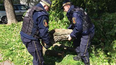 Straż miejska przenosi fragment drzewa z pisklętami