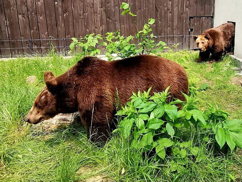 Niedźwiedzice na nowym wybiegu