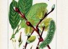 Kwiaty i owoce drzew wiatropylnych w kuchni