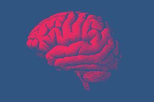 Im bardziej pobudzony mózg, tym krótsze życie. Badaczy tak to zaskoczyło, że sprawdzali wyniki przez dwa lata