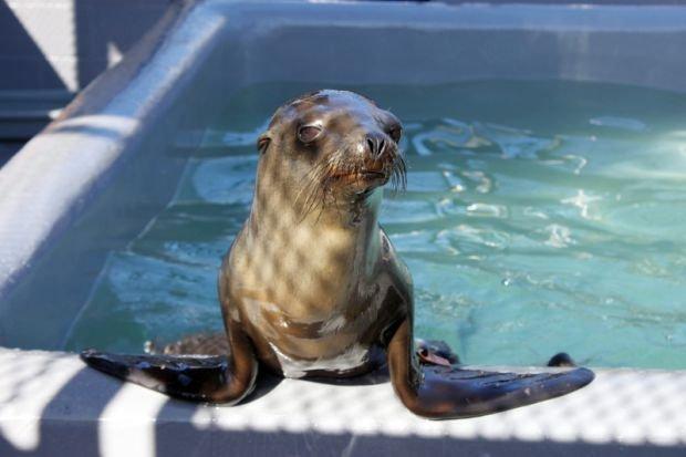 Rubbish w Marine Mammal Center