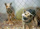 Zwierzęta - czyste złoto. Pseudohodowle, przemyt i polowania - kto i ile na tym zarabia?