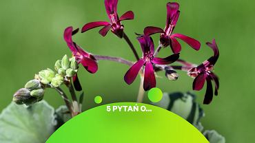 Niepozorna roślina zrewolucjonizuje leczenie sezonowych infekcji? Może nie, ale działa