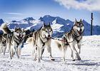 Filmy o psach - najciekawsze opowieści o sympatycznych czworonogach