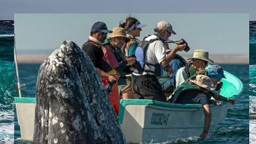 Wieloryb zaskoczył obserwatorów
