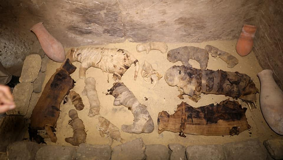 Koty, krokodyle i chrząszcze - mumie zwierząt sprzed 2 500 lat znaleziono w Egipcie