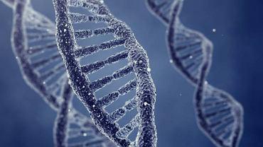 BRCA 1 to największy gen występujący w ludzkim organizmie. Jego mutacja może zwiększać ryzyko zachorowania na raka jajnika lub prostaty