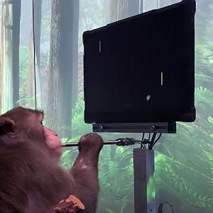Małpa gra w Ponga, sterując nim myślami.