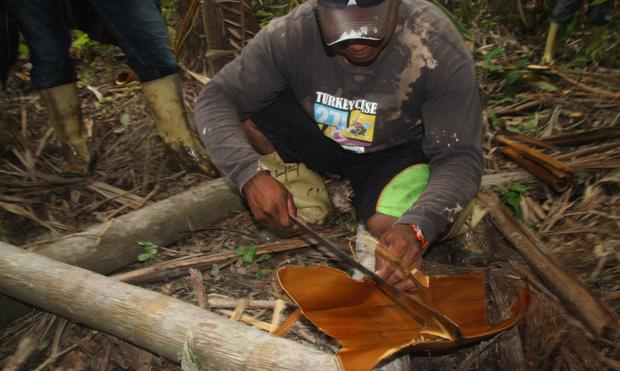 podróże, ameryka południowa, Podróż do Wenezueli: dżungla i sztuczne piers