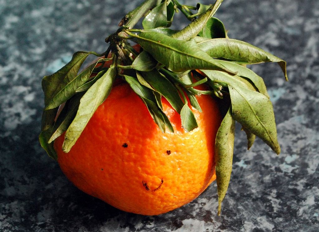 Pomarańcza to (obok cytryny) najpopularniejszy z cytrusów