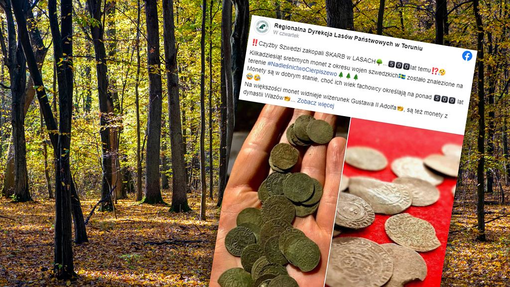 Znalezisko w toruńskich lasach