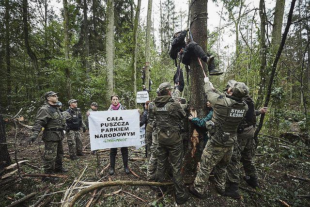 6 września w Nadleśnictwie Białowieża, w strefie ochronnej UNESCO, o świcie rozpoczęła się kolejna blokada wycinki najstarszej części Puszczy Białowieskiej. Około 40 aktywistów Greenpeace z 9 państw i osoby z Obozu dla Puszczy zablokowały pracę maszyn, które wycinały i przygotowywały do wywozu drzewa mimo zakazu wydanego przez Trybunał Sprawiedliwości UE.