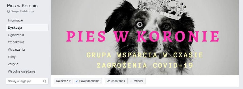 Pies w koronie, internetowa grupa wsparcia w czasie koronawirusa