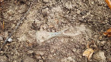 Siekierka sprzed trzech tysięcy lat odkryta w polskich lasach