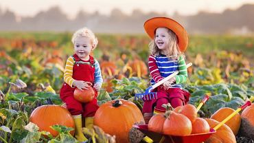 Pierwszy dzień jesieni 2018 zbliża się wielkimi krokami. A jak jesień to i jej skarby: kasztany, żołędzie, jarzębina, ale i dynie, z których można zrobić fajne ozdoby, a miąższ wykorzystać do zrobienia zupy.