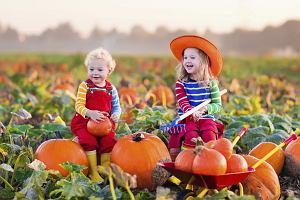Pierwszy dzień jesieni 2018: kiedy rozpoczyna się kalendarzowa, a kiedy astronomiczna jesień
