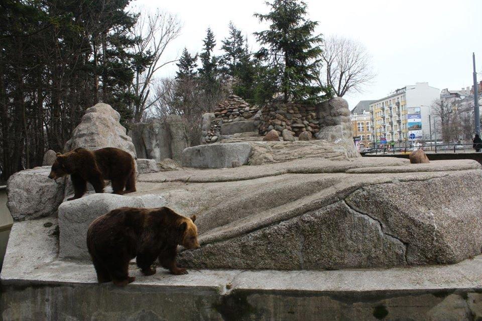 Niedźwiedzie brunatne na odnowionym wybiegu