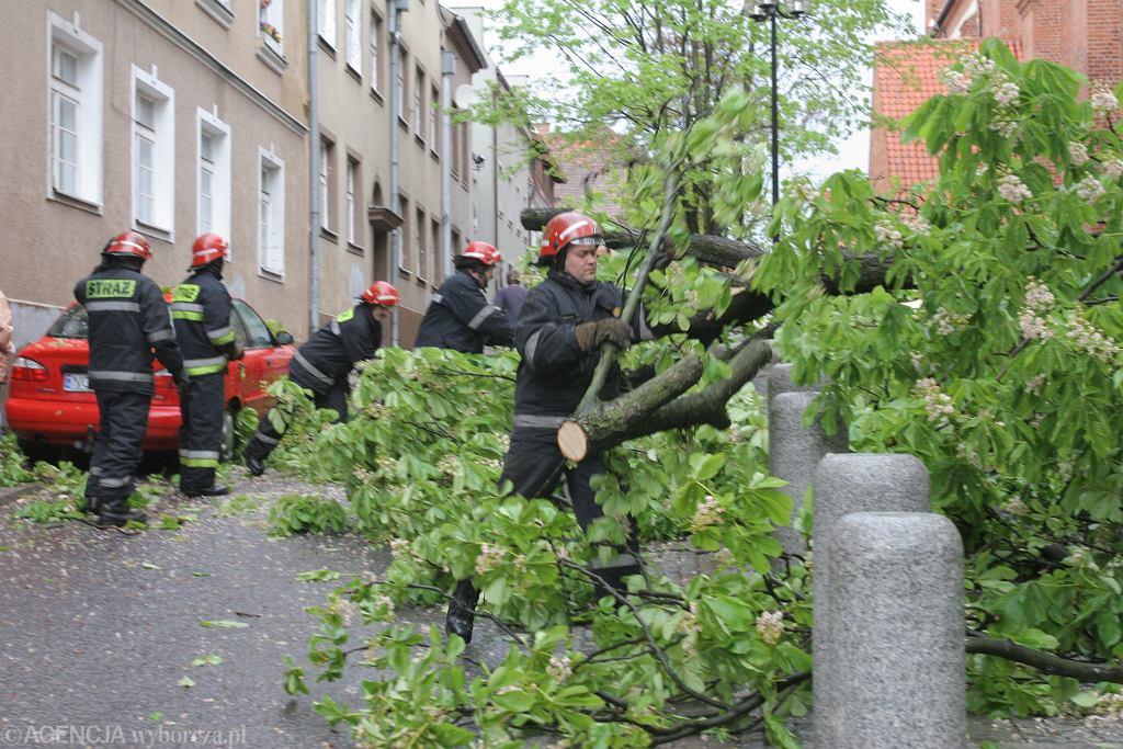 Powalone drzewo - zdjęcie ilustracyjne
