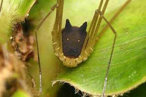 Pigułki na seks czarnej mrówki
