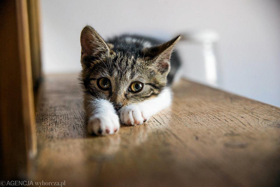 Co zrobić, gdy kot gryzie i drapie w trakcie zabawy? – Wszystko o Kotach