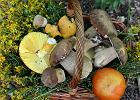 Nie tylko podgrzybki i prawdziwki. Poznajcie kilka mniej popularnych grzybów jadalnych!