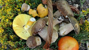 Nie tylko podgrzybki i prawdziwki. Poznajcie kilka mniej popularnych grzybów