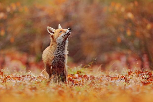 Światowy Dzień Zwierząt. Zdjęcie ilustracyjne
