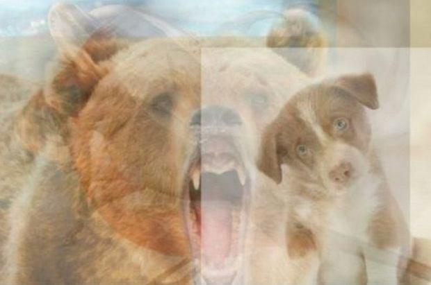 Jakie zwierzę widzisz na obrazku?