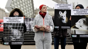 Plac Wolności w Poznaniu - protest Stowarzyszenia Otwarte Klatki przeciw zabijaniu zwierząt futerkowych