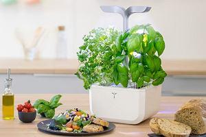 Jak przechowywać zioła w kuchni? - podpowiadamy