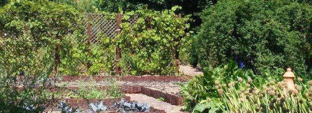 Ogród pożytkowo-fruktyfikujący w Wilanowie