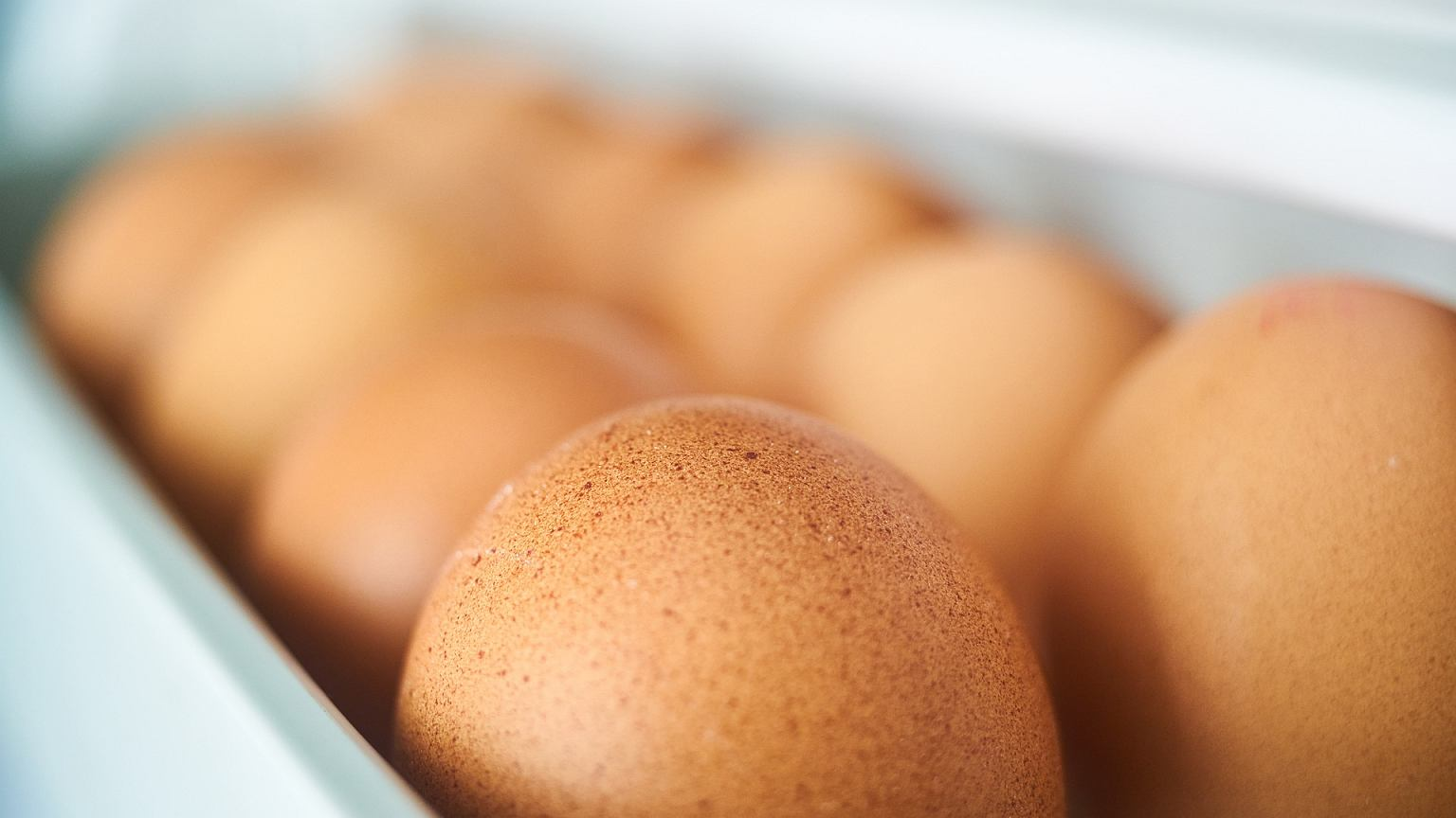 Składanie i wysiadywanie jaj - weseleczestochowa.pl