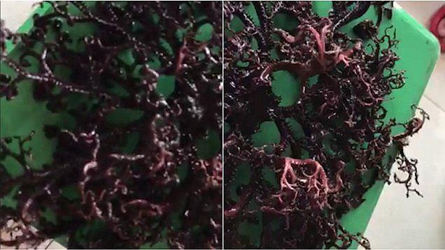 To zwierzę czy roślina?
