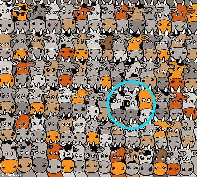Znajdź psa ukrytego wśród stada krów