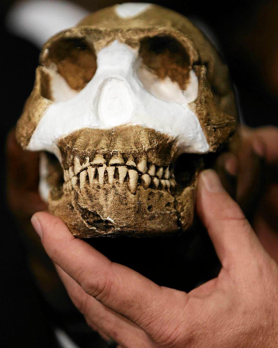 Zdjęcie numer 3 w galerii - Homo naledi. Jak odkryto nowy gatunek człowieka.