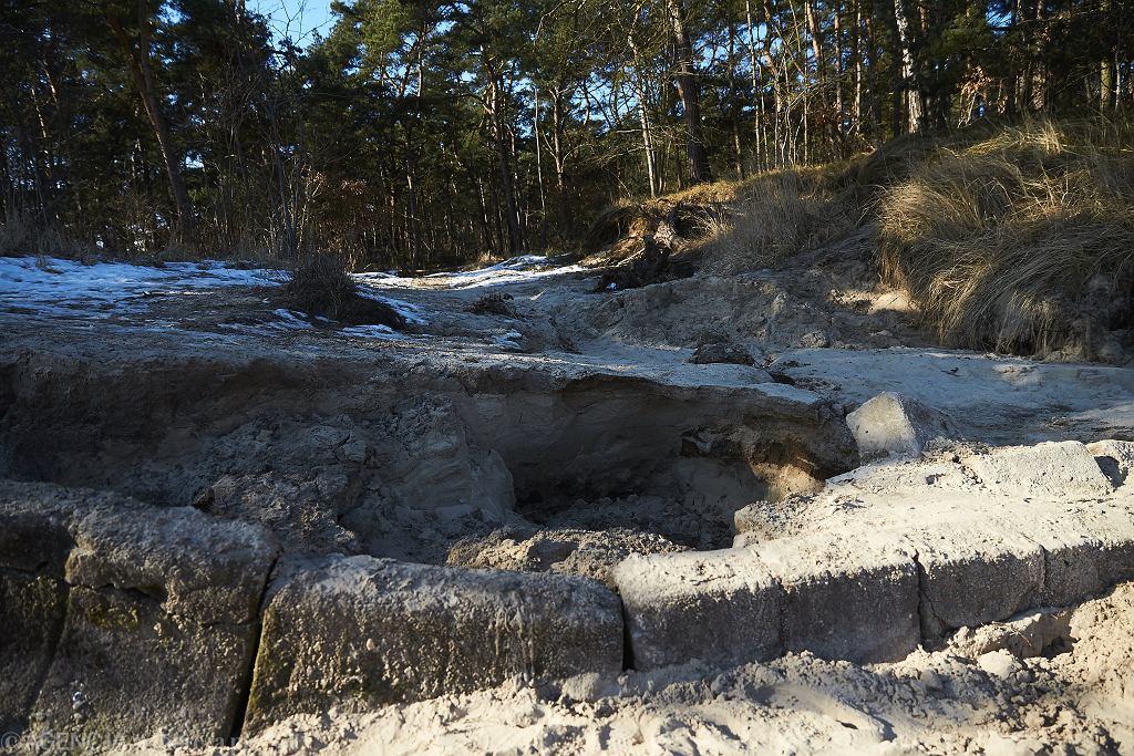 Wyspa Sobieszewska, szkody wywołane nielegalnym wydobyciem bursztynu