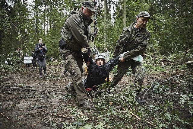 6 września w Nadleśnictwie Białowieża, w strefie ochronnej UNESCO, o świcie rozpoczęła się kolejna blokada wycinki najstarszej części Puszczy Białowieskiej. Około 40 aktywistów Greenpeace'u z 9 państw i osoby z Obozu dla Puszczy zablokowały pracę maszyn, które wycinały i przygotowywały do wywozu drzewa mimo zakazu wydanego przez Trybunał Sprawiedliwości UE.