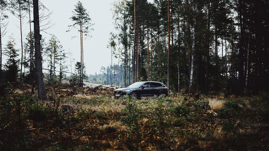 Volvo zasadzi las. Internauci zadecydują gdzie