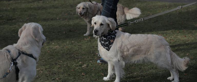 Podatek od posiadania psa 2020. Ile wynosi? Kto jest z niego zwolniony?