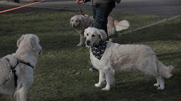 Podatek od psa. Ile wynosi w 2020 roku? W których gminach obowiązuje?