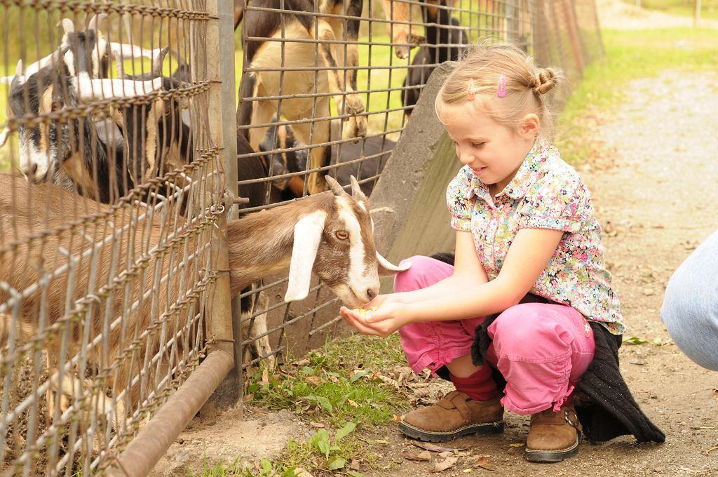Dzieci, które wychowują się blisko natury i mają regularny kontakt ze zwierzętami, o wiele rzadziej zapadają na choroby płuc (fot. Yarinca / iStockphoto.com)