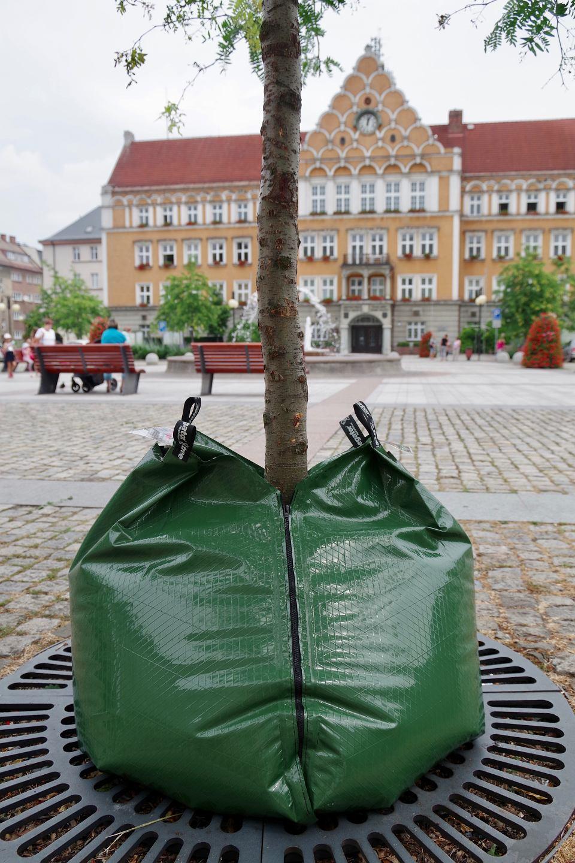 Zamontowali specjalne worki na wodę, które pomogą drzewom w mieście przetrwać suszę