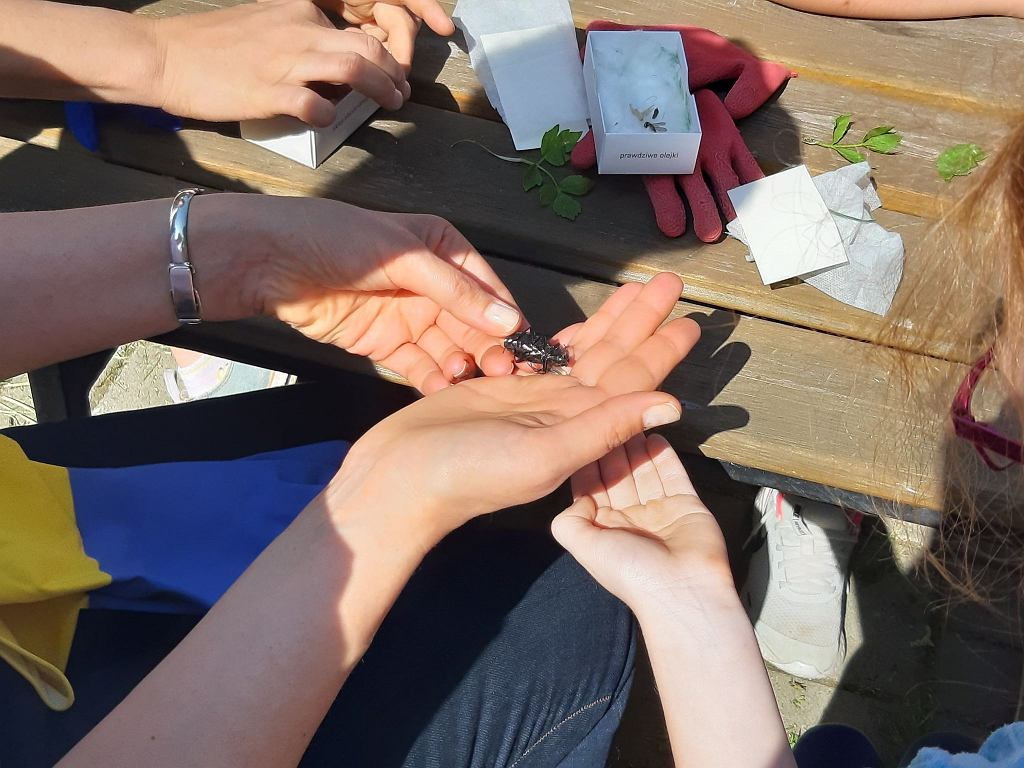 Uczniowie Publicznej Szkoły Podstawowej nr 23 w Wałbrzychu sadzili łąki kwietne dla owadów