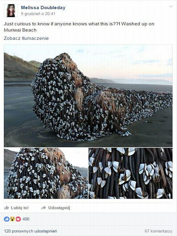 Tajemniczy obiekt na plaży