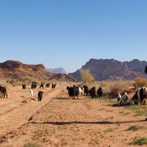 Życie pustyni: podróż do Jordanii