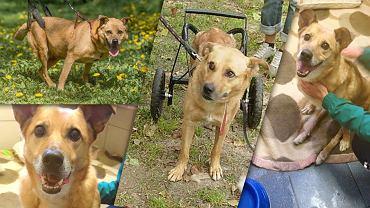 Rudek jest sparaliżowany i od 9 lat bezdomny. Potrzebuje specjalnego wózka.