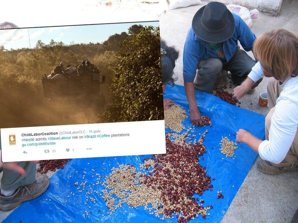 Plantacje kawy w Brazylii